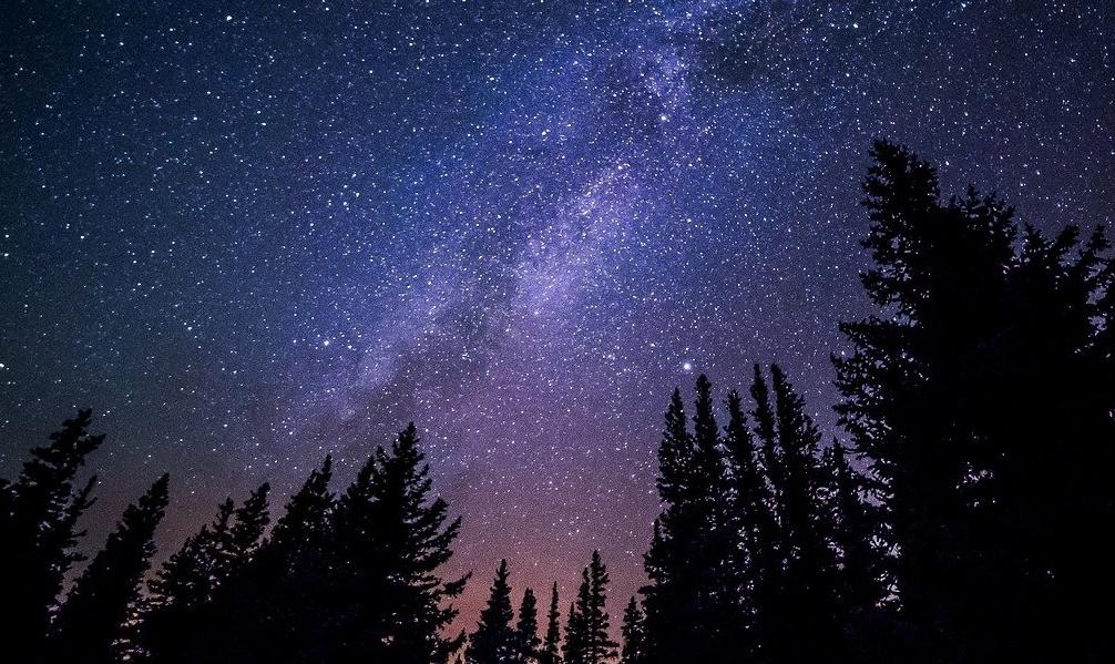 Niebo nocą usiane gwiazdami. Widać też na tle nieba wierzchołki iglastych drzew.